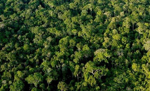 Justiça ambiental e Saúde em destaque